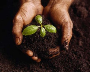 seed,sow,environment,green,tree,inspirational,thoughts, pictures, quotes