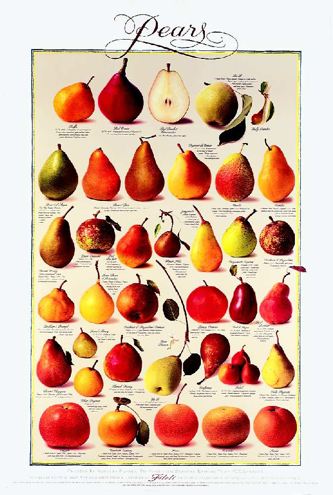 Tip of the Day,Healthy Living,Health Benefits of Pears, Fruits, Health Inspirations, Pictures, Quotes
