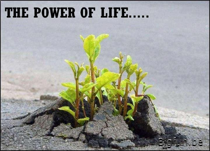 YES… This is the Power of LIFE!!!!!.. Survive and Thrive in adverse ...