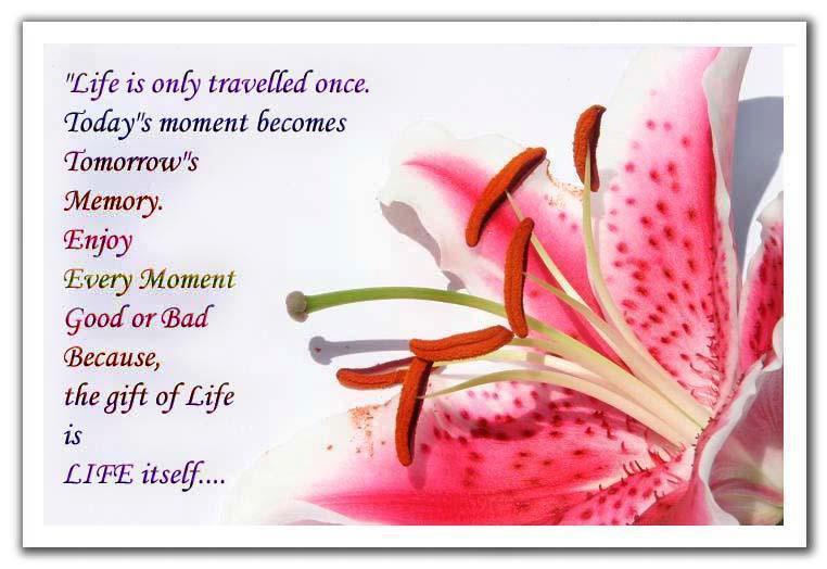 today's moment becomes tomorrow's memory. Enjoy every moment, good ...
