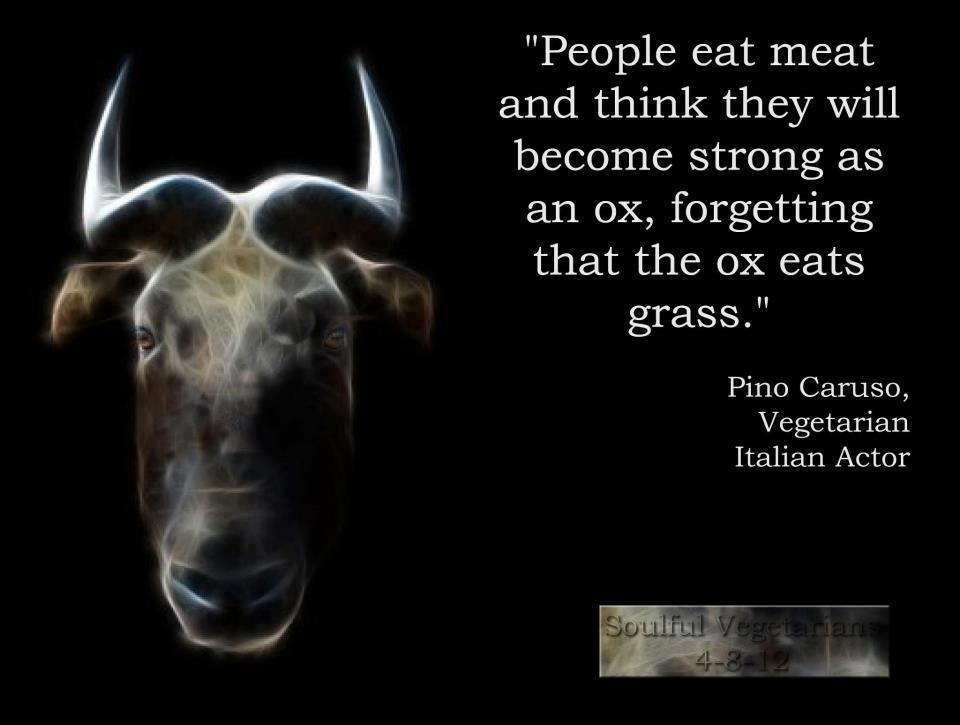 lie learning quotes, Pino Caruso, vegetarian, India's Top inspirational picture blogs, India's Top Blogs, Picture quotes, Inspirational pictures, motivational site,Rishika Jain, Inspirational Quotes, Motivational Pictures, Inspirational Pictures,sms,