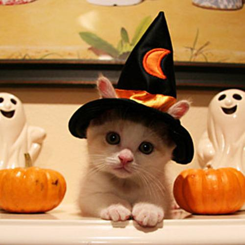 Halloween Wishes,greeting cards,cat,quotes,poem,children,idea,Inspirational Quotes, Motivational Pictures and Wonderful Thoughts