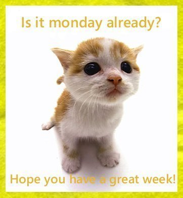Monday Quotes, Weekend Over, Weekend Quotes, Humor Quotes, Pictures, Inspirational Jokes, SMS, Messages,