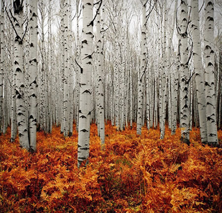 Beautiful Places,tourism,famous place,city to visit,Silver Forest, Colorado, USA