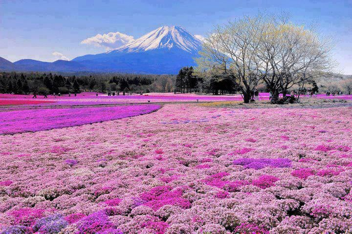 beautiful visiting places, tourism,  Mount Fuji. Japan.