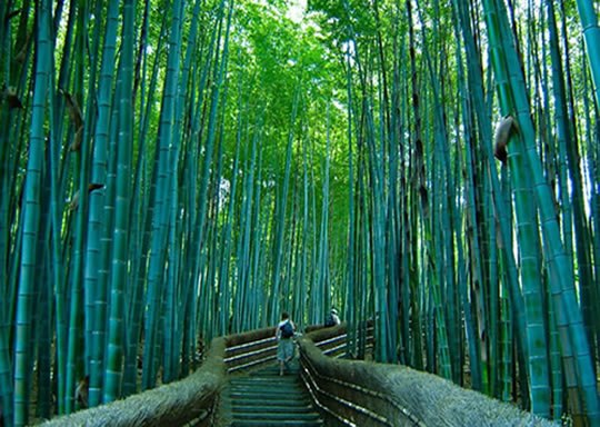 most beautiful places to visit,Sagano Bamboo forest, Japan