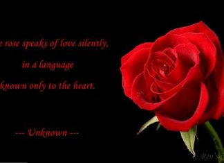 Rose Day Messages,Quotes,Wishes,Images,wallpapers