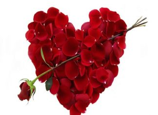 ROSE DAY greetings,wishes,quotes,sms,messages