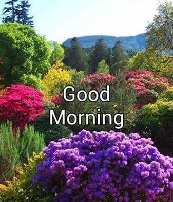 good morning,Trust - Inspirational Quotes, Pictures & Motivational Thoughts