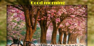 Good morning whatsapp status,messages,Inspirational Pictures, Quotes and Motivational Thoughts
