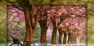 whatsapp status,messages,quotes,Beautiful thought