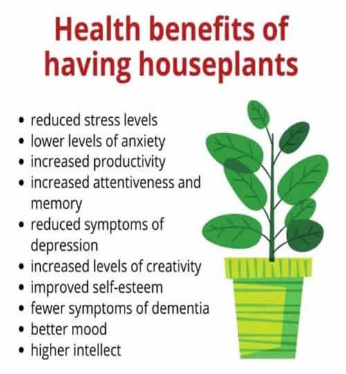 health benefits of having houseplants