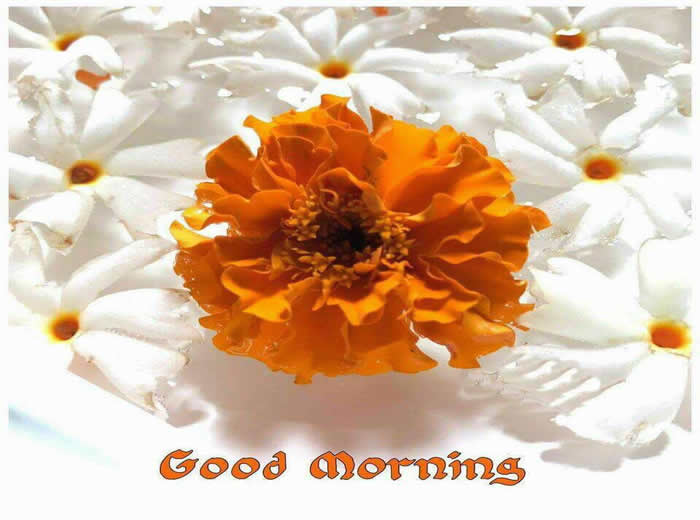 whatsapp good morning,Happiness ,Positive Thinking status,messages,quotes,