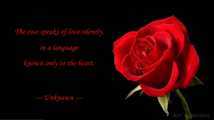 Love Quotes and Images,valentines day,rose day