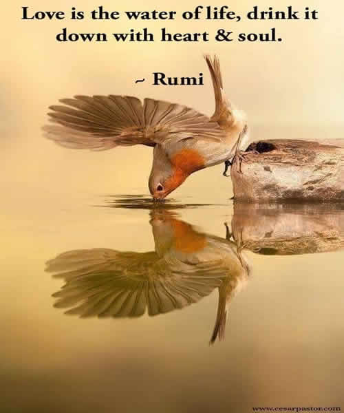 love,rumi,Beautiful Quotes,Inspirational Quotes, Pictures and Motivational Thoughts